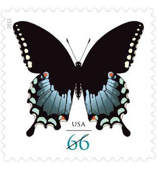 2013 butterfly