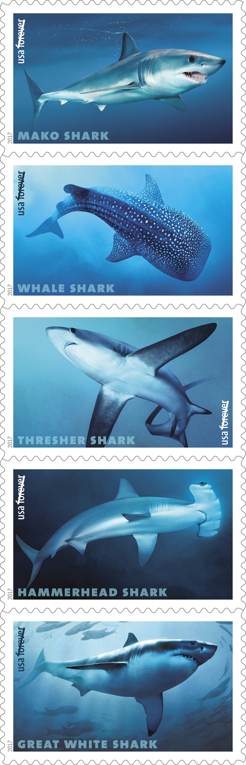 17-Sharks-stamps3