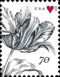 Tulip-70