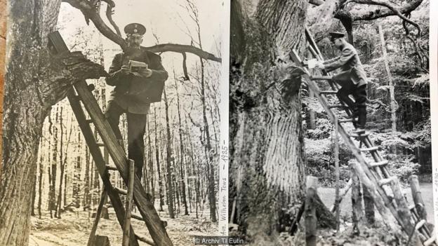 Bridegroom tree post