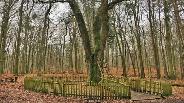 Bridegroom tree post 2