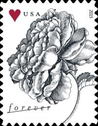 Rose-forever