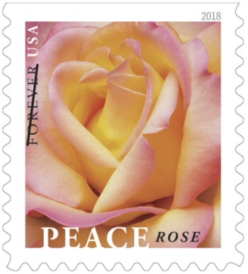 Peace rose stamp