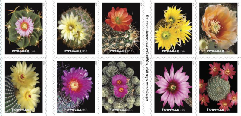 Cactus flower stamps